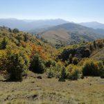 Mountain walking from Vasilitsa (2247 m.) to Avdella (1300 m.).   Ορειβατική διαδρομή Βασιλίτσα (2247μ.) Αβδέλλα (1300μ.)