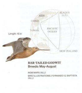 Ο Προσανατολισμός των πτηνών και των άλλων ζώων.